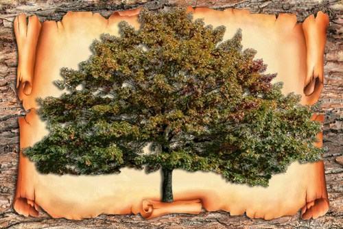 *** Дерево Рода - иерархия предков ***