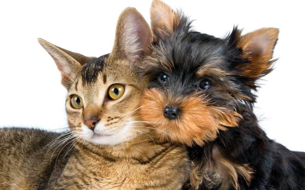 домашние животные и грахи